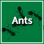 Ant Control Durban - Service Master - Pest Control, Cleaning & Hygiene