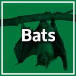 Bat Control Durban - Service Master - Pest Control, Cleaning & Hygiene