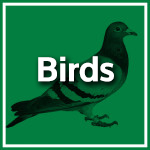 Bird Control Durban - Service Master - Pest Control, Cleaning & Hygiene