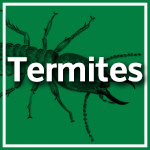 Termites and White Ants Durban - Pest Control Durban - Service Master Image