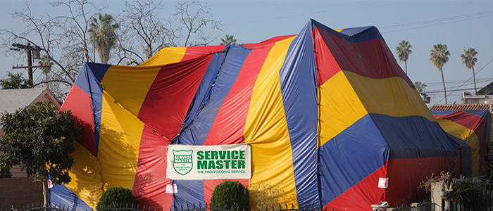 Woodborer Fumigation & Spot Treatment, Tented Fumigation - Service Master Durban